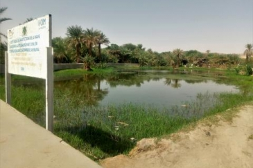 The Aboubou pond is part of Bilma's collective heritage and managed by the community itself. Photo: IOM/Ahmed Elhadji