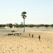The Sahel has been battered by drought due to climate change.
