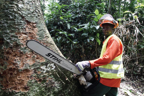 Under a sustainable forestry programme, a logger cuts down a tree in the Ndoki rainforest of the Democratic Republic of the Congo