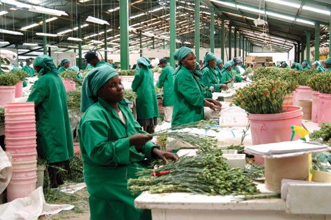 Kenya's horticulture industry has been hit hard by the global economic slowdown