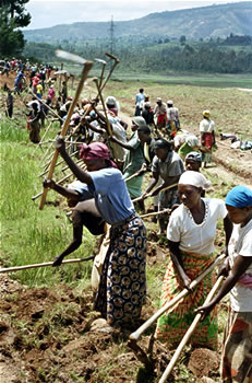 Women dig irrigation canals in Rwanda: NEPAD acknowledges that women play the predominant role in food production
