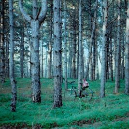 Safeguarding the world's forests – our best bet for sustainable societies