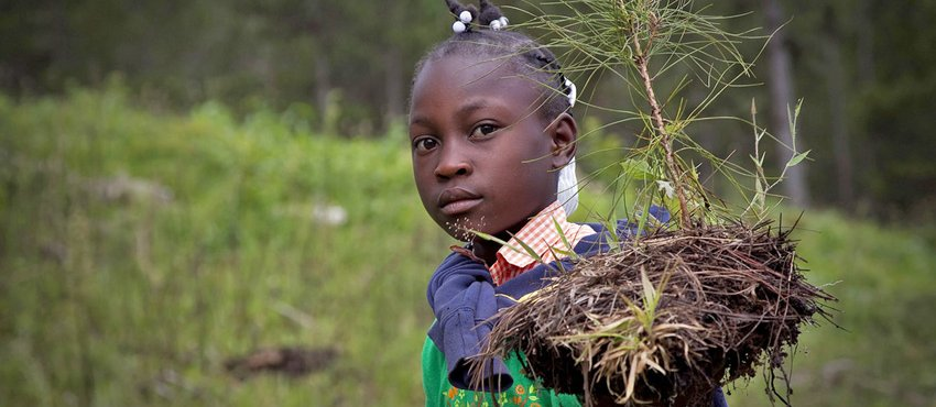 Photo of young Haitian girl carrying seedling.