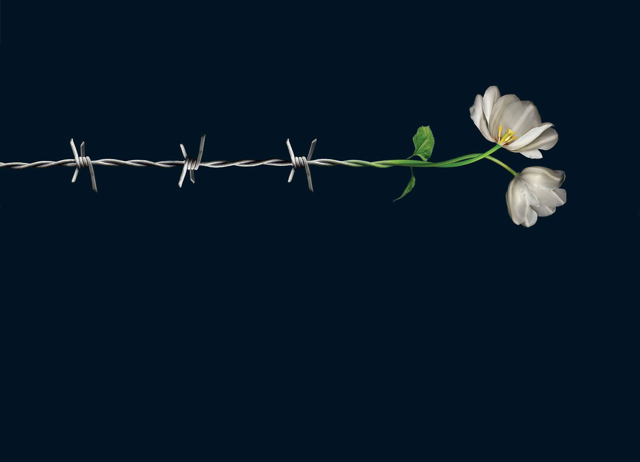A flower growing out of barbed wire