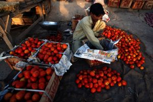 A man squats as he unpacks tomatoes from a box. There are piles of tomatoes surrounding him, and tables on his left.