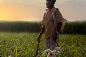 An elderly man stands in a green field with a dog. He looks out to the distance and is holding a long knife. There is a sunset in the background and a sugarcane plantation.