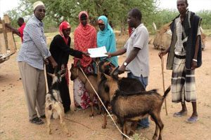 A group of people are holding several goats. One man is leaning over the goat to pass a certificate to a woman standing on the other side.