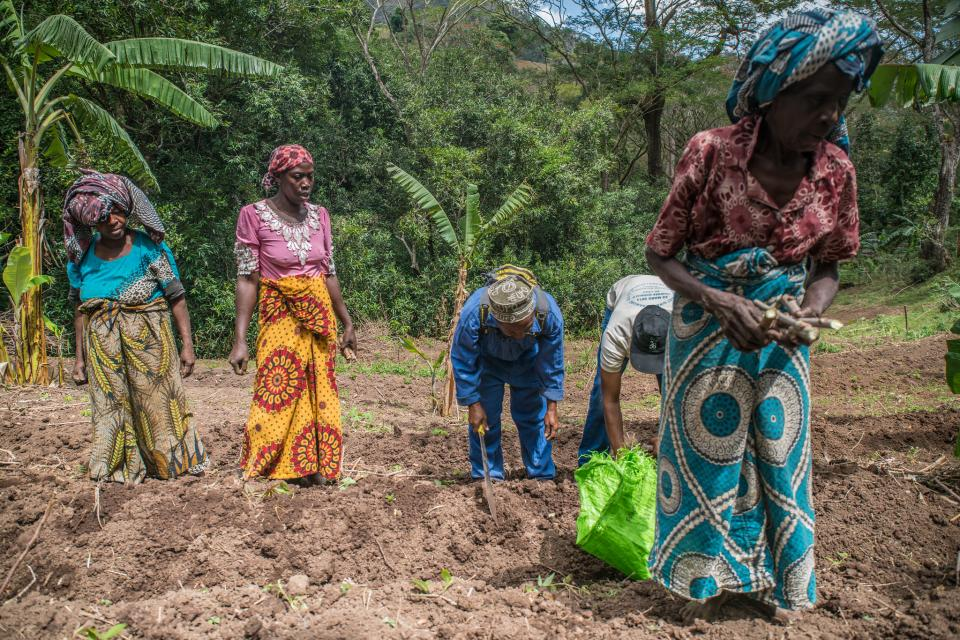 Picture of the community planting trees in Comoros.