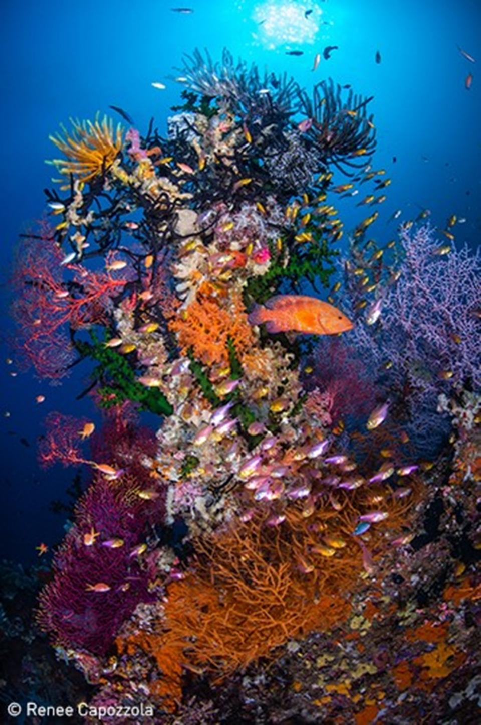 Photo: Capozzola, UN World Oceans Day Photo Competition