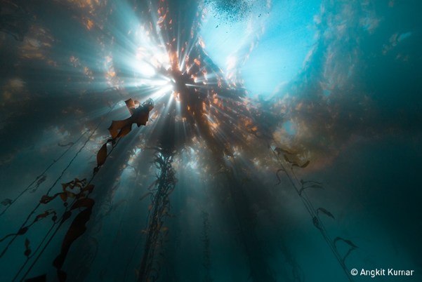 Light passing through kelp in water. Photo: Kumar, UN World Oceans Day Photo Competition