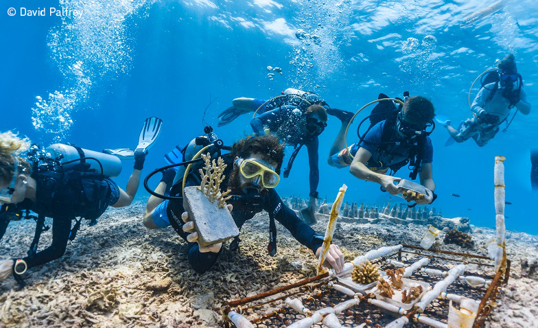 Divers and coral restoration project. Photo: Palfrey, UN World Oceans Day Photo Competition