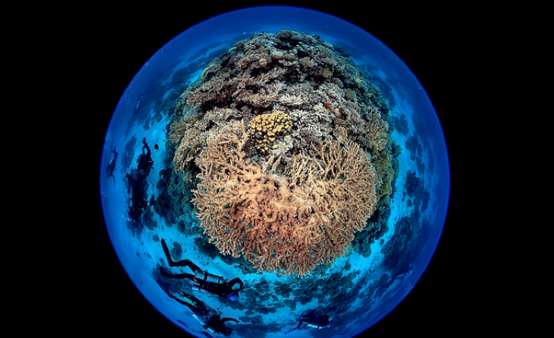 Fisheye view of coral reef and divers. Photo: Wu, UN World Oceans Day Photo Competition