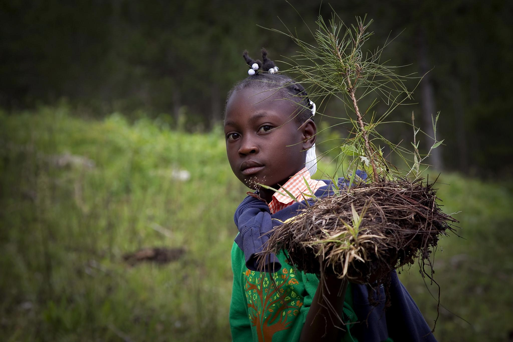 The picture of Haitian students breathe new life into depleted pine forest.