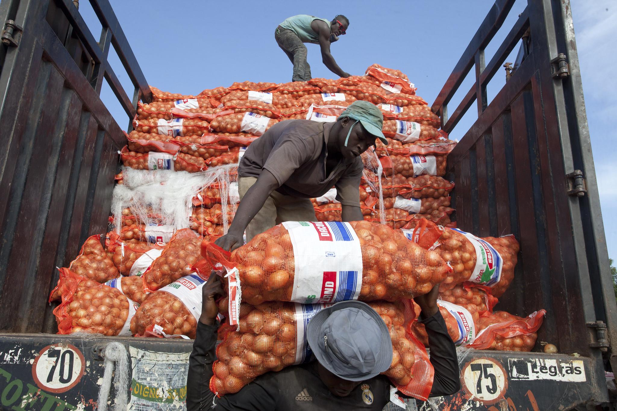 Unload sacks of onions in a farmers market in Bamako