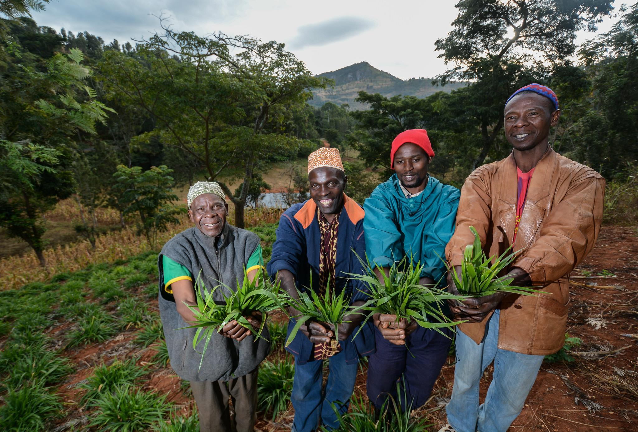 Farmers at a community plot testing different forages in Tanzania.