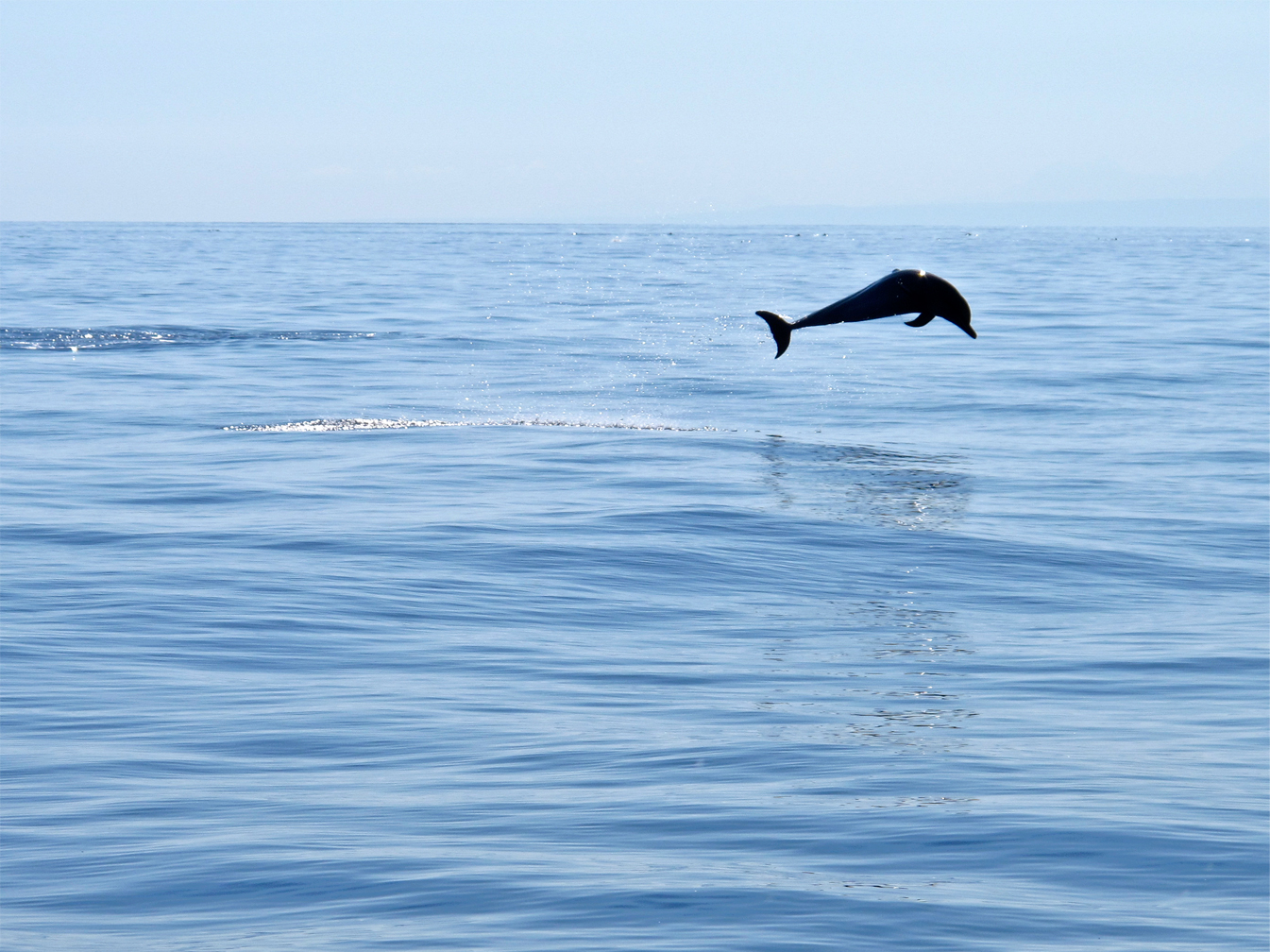 A dolphin leaps through the waters off Atauro Island, Timor-Leste. The deep oceanic waters off Timor-Leste, along the Wetar and Ombai Strait, are a major migratory route between the Pacific and Indian Ocean for marine wildlife.