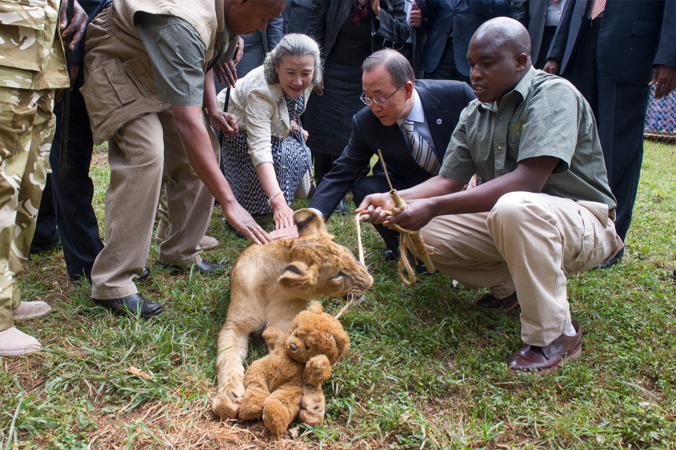 "Secretary-General Ban Ki-moon (centre right) and his wife, Yoo Soon-taek (centre left) visited Nairobi National Park and adopted a lion cub as a sign of support for efforts against the trafficking of animals around the world. He said he adopted the six-month old cub, whose Kiswahili name Tumaini means ""hope"", to show solidarity for the preservation efforts of the Kenyan people, and as a token of his concern for the Kenya Wildlife Service and park rangers."
