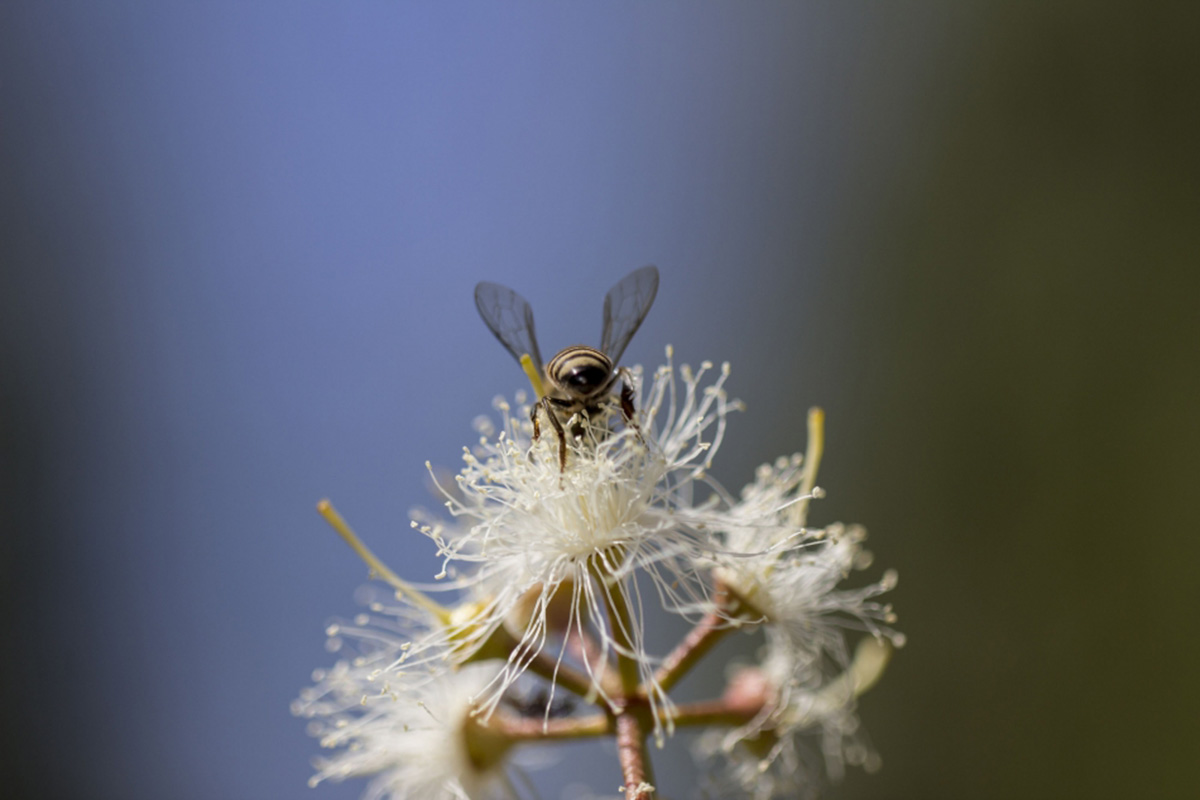 Close-up of a bee on a flower