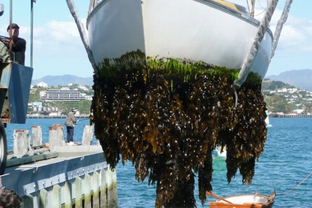 boat being pulled up with algae on the bottom