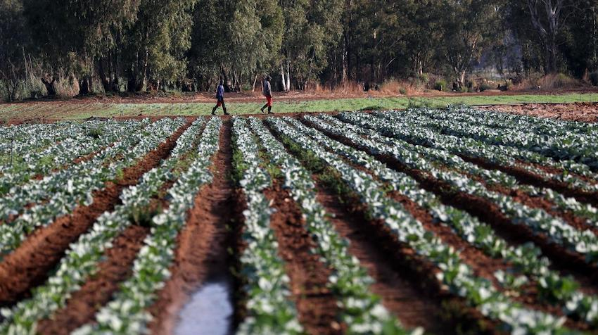 A lack of basic agricultural data is holding African countries back | United Nations