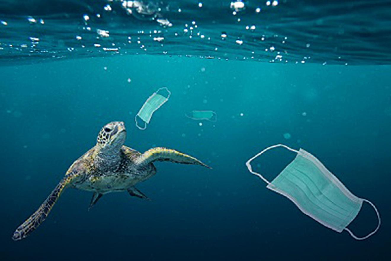 Sea turtle swims among discarded facemasks.