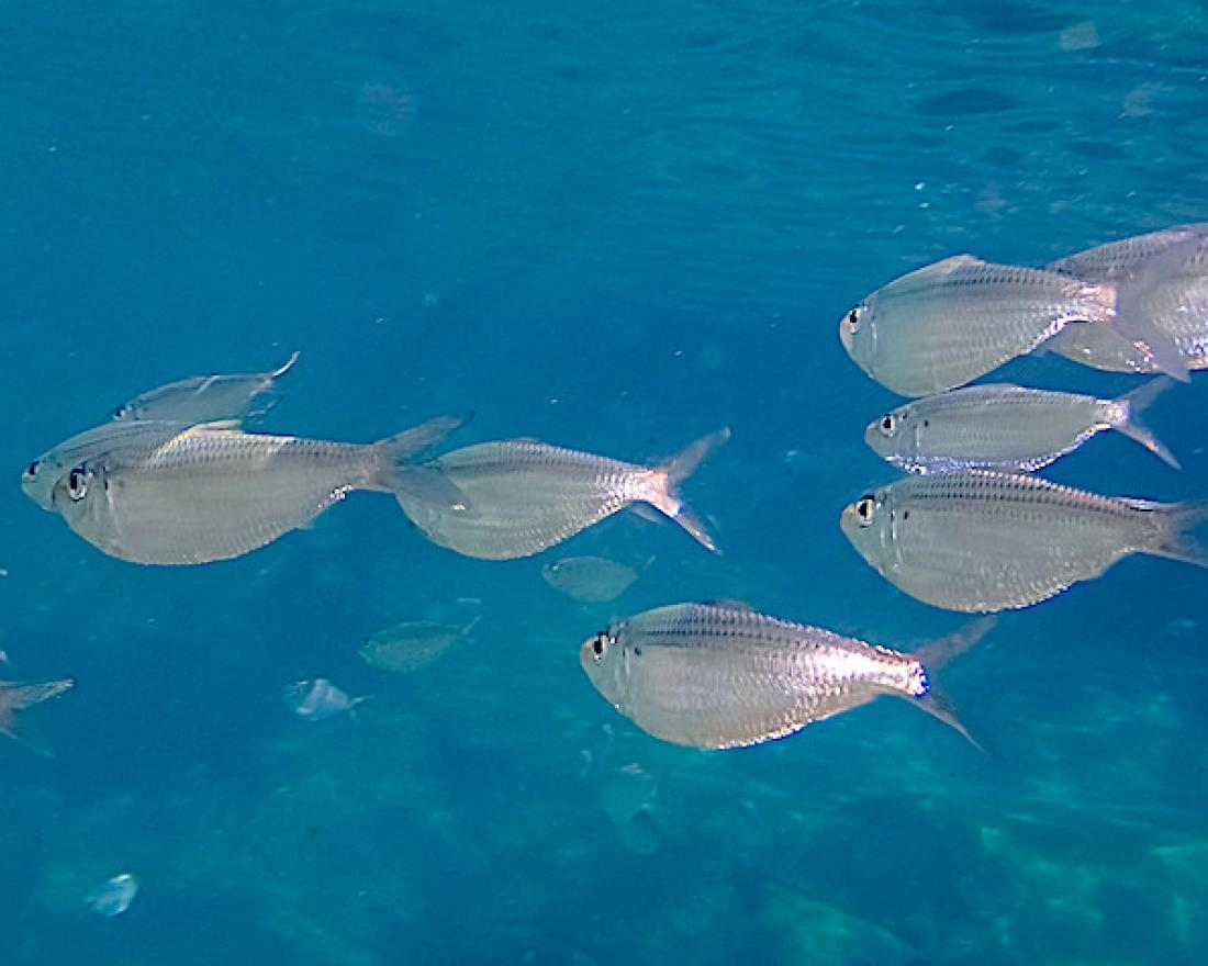 Fish swimming in the ocean in Florida, United States