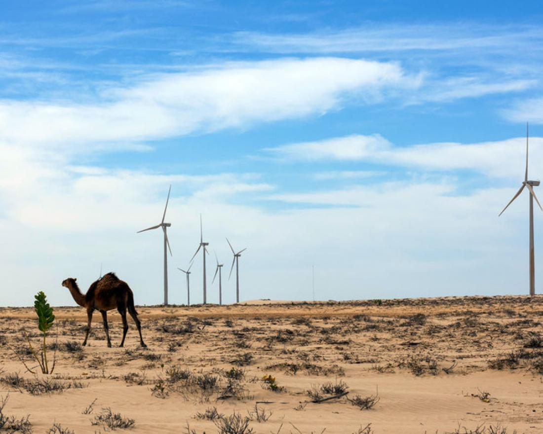 A camel stand in a windmill park on the outskirt of Nouakchott, Mauritania.