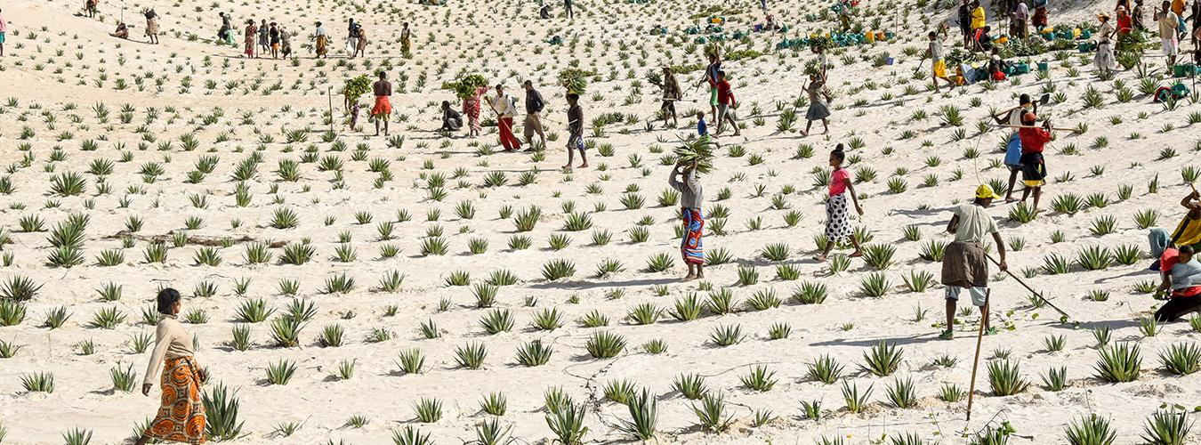 People on a sand landscape tending to crops