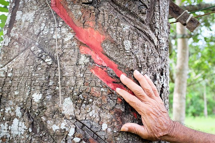 Hands touching a tree trunk