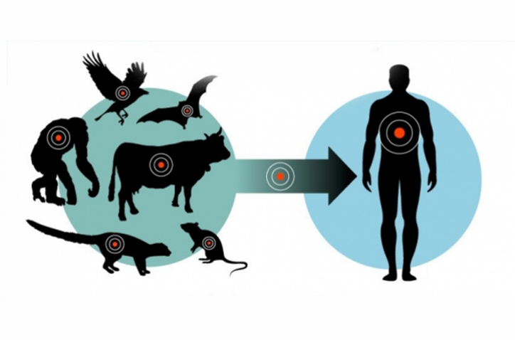 Graphic that represents a zoonosis process
