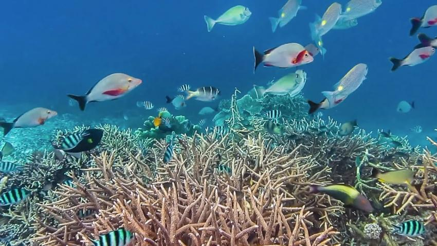 Save-the-ocean-—-protect-the-future