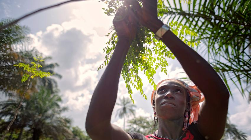 Through a grant from UN-Women, Partenariat Recherches Environnement Medias has taught women in Katfoura, Guinea, how to plant the vitamin-rich moringa tree and how to clean, dry and sell its leaves. 10 November 2015. UN-Women/Joe Saade.