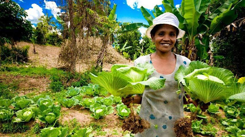 Madagascan cabbage farmer