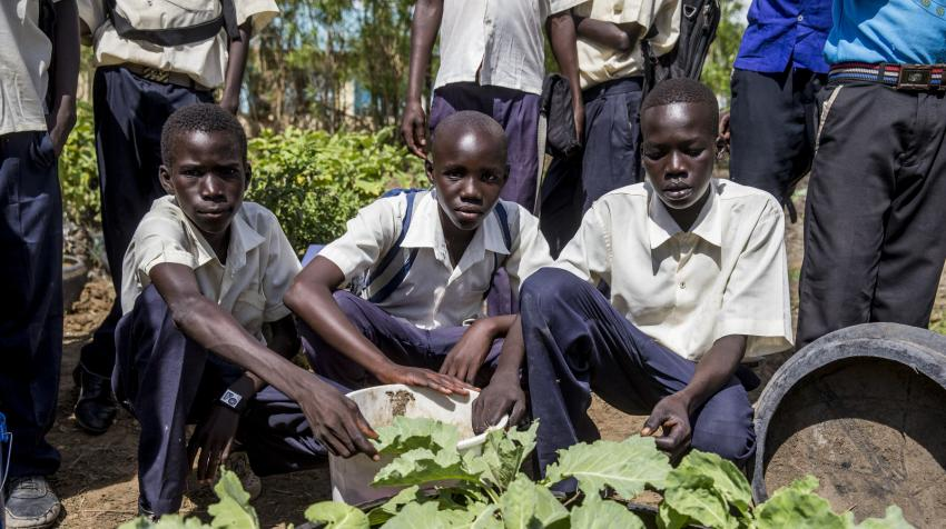 Three students of a school agriculture club are posing in their school garden with food crops they have been cultivating.