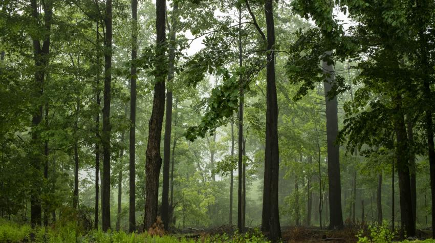 View of a forest in Narrowsburg, New York State, United States, after a rain storm. 3 June 2020. UN Photo/Mark Garten
