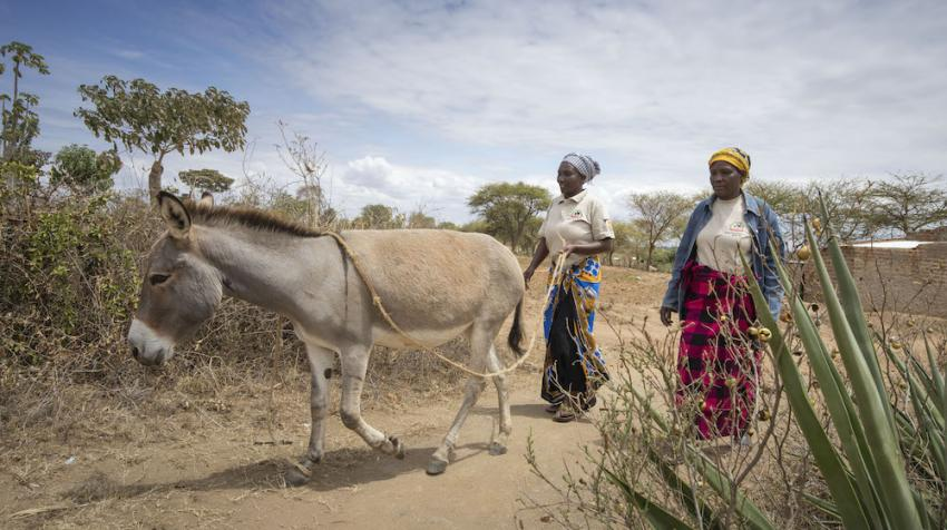 Image of small-holder farmers with their working donkey