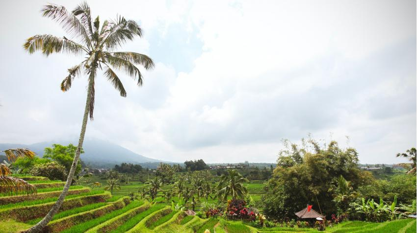 Agricultural land in Indonesia. Photo by Pexels/Julien Pannetier