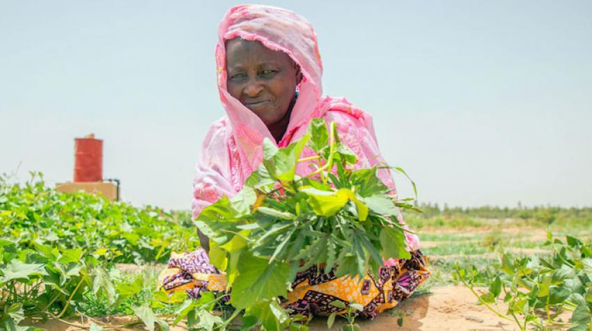 Food Systems Summit in September 2020