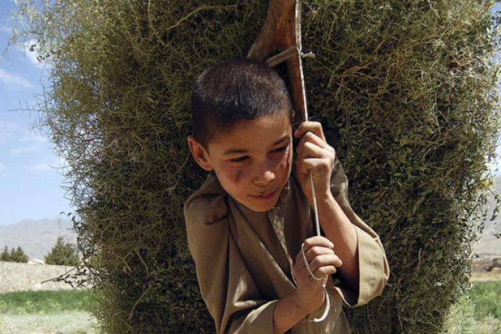 Young Afghan boy carrying the kindling used in the rural areas of the country for heating homes and cooking meals.