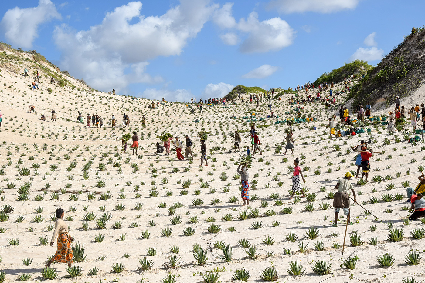 Faux-Cap communities seed plants to stabilize the creeping dunes which bury crops and homes. ©UNDP Madagascar/M. Mazou