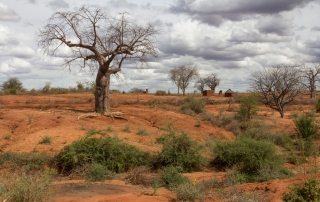"""Photo: 17 June 2016 – Nearly 800 million people are chronically undernourished as a direct consequence of land degradation, declining soil, fertility, unsustainable water use, drought and biodiversity loss, requiring long-term solutions to help communities increase resilience to climate change, United Nations Secretary-General Ban Ki-moon declared today. """"The livelihoods and well-being of hundreds of millions of people are at stake,"""" the Secretary-General said in his message to mark the World Day to Combat Desertification, whose theme this year is 'Protect Earth. Restore land. Engage people.' """"Over the next 25 years, land degradation could reduce global food productivity by as much as 12 per cent, leading to a 30 per cent increase in world food prices,"""" he added. Ranking among the greatest environmental challenges of our time, desertification is a phenomenon that refers to the persistent degradation of dryland ecosystems by human activities – including unsustainable farming, mining, overgazing and clear-cutting of land – and by climate change. The Day – which is observed annually on 17 June – is intended to promote public awareness of the issues of desertification and drought, and the implementation of the UN Convention to Combat Desertification (UNCCD) in those countries experiencing serious drought and/or desertification."""