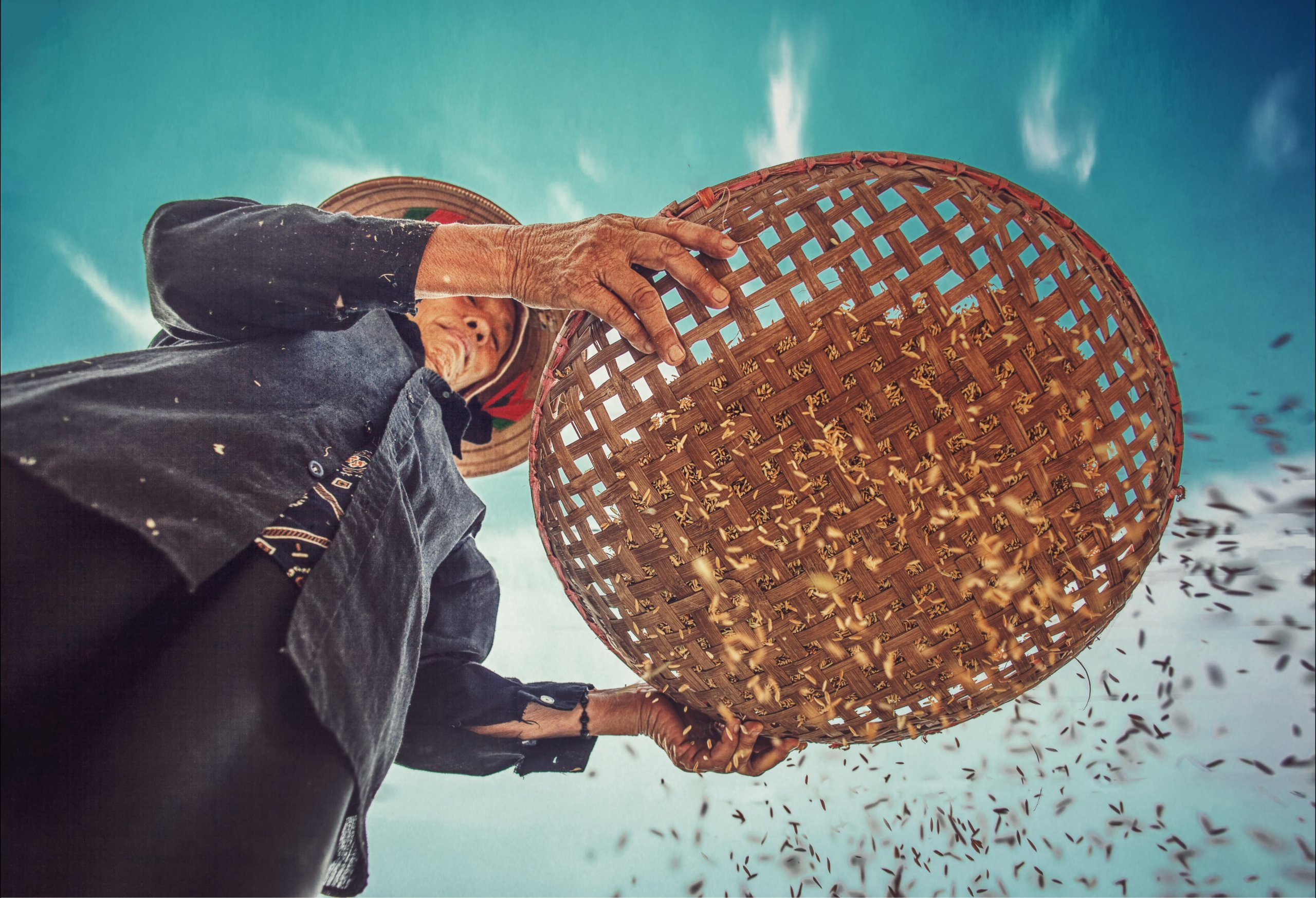 shot from below, showing a person sifting rice