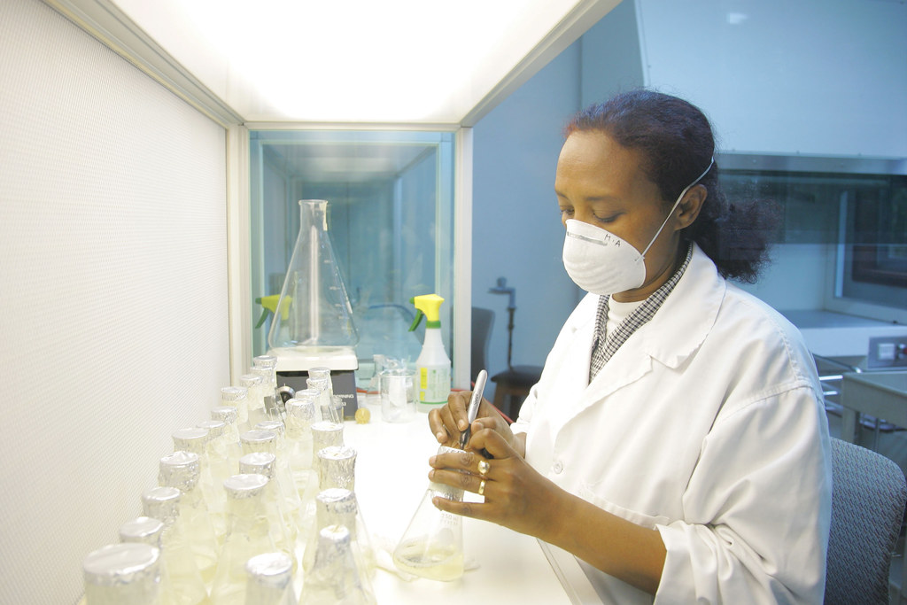 Mulu Abebe, ILRI lab technician, prepares media for tissue culture in the tissue culture lab (photo ILRI/Stevie Mann)