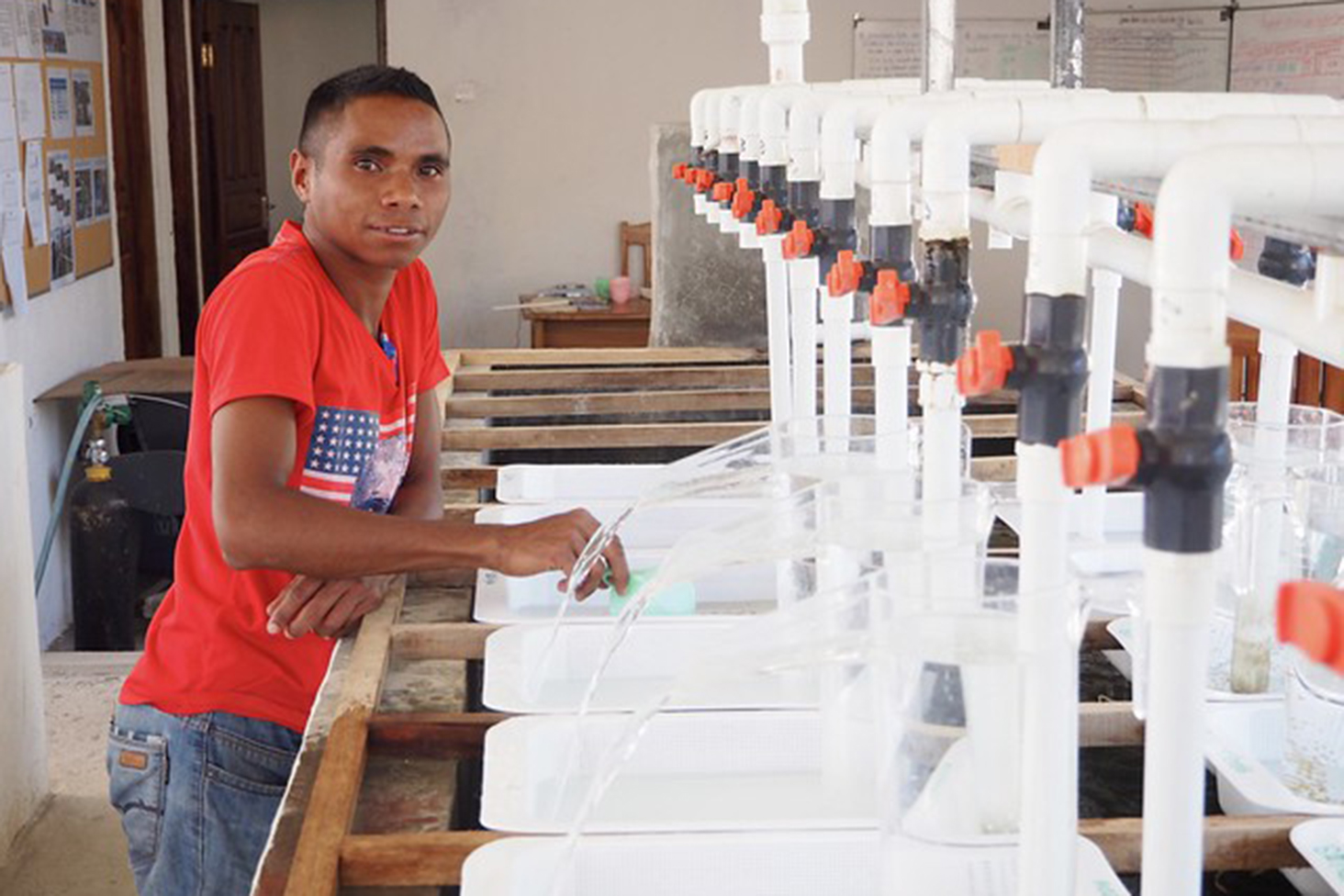 Counting fry at Gleno hatchery, Timor-Leste. Photo Kate Bevitt